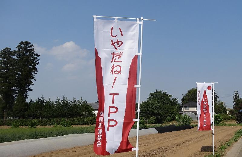 のぼり旗畑