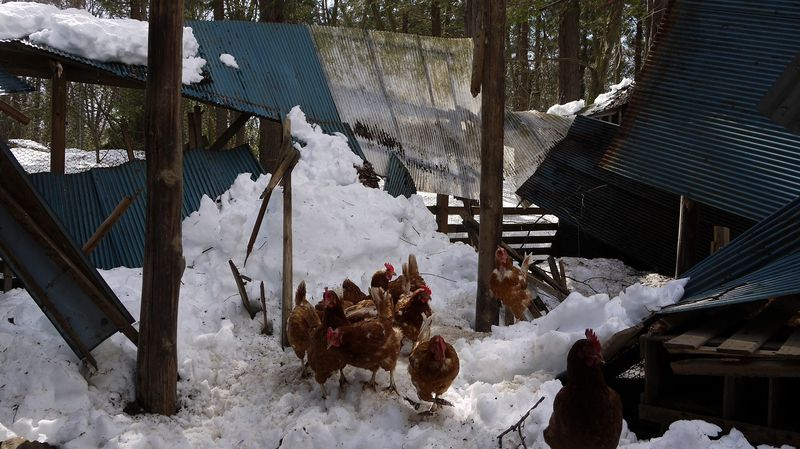 鶏小屋内側